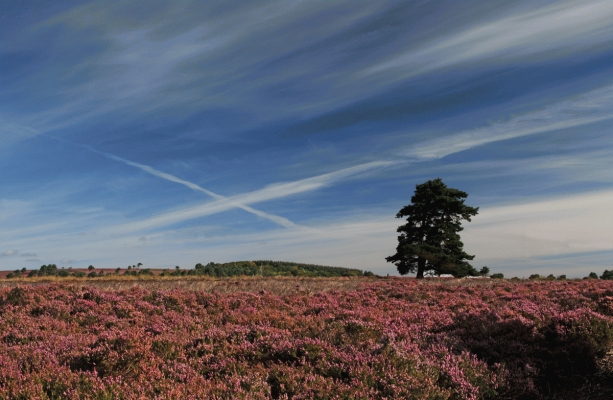 Saltire in the sky, Scottish Borders