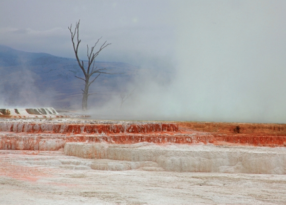 USA: Yellowstone, Mammoth Hot Springs with petrified tree
