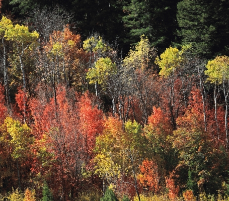 USA: Logan Canyon, Idaho, Fall colours