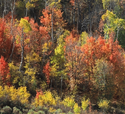 USA: Logan Canyon, Idaho, Fall colours 2